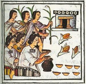 azteca-cosecha